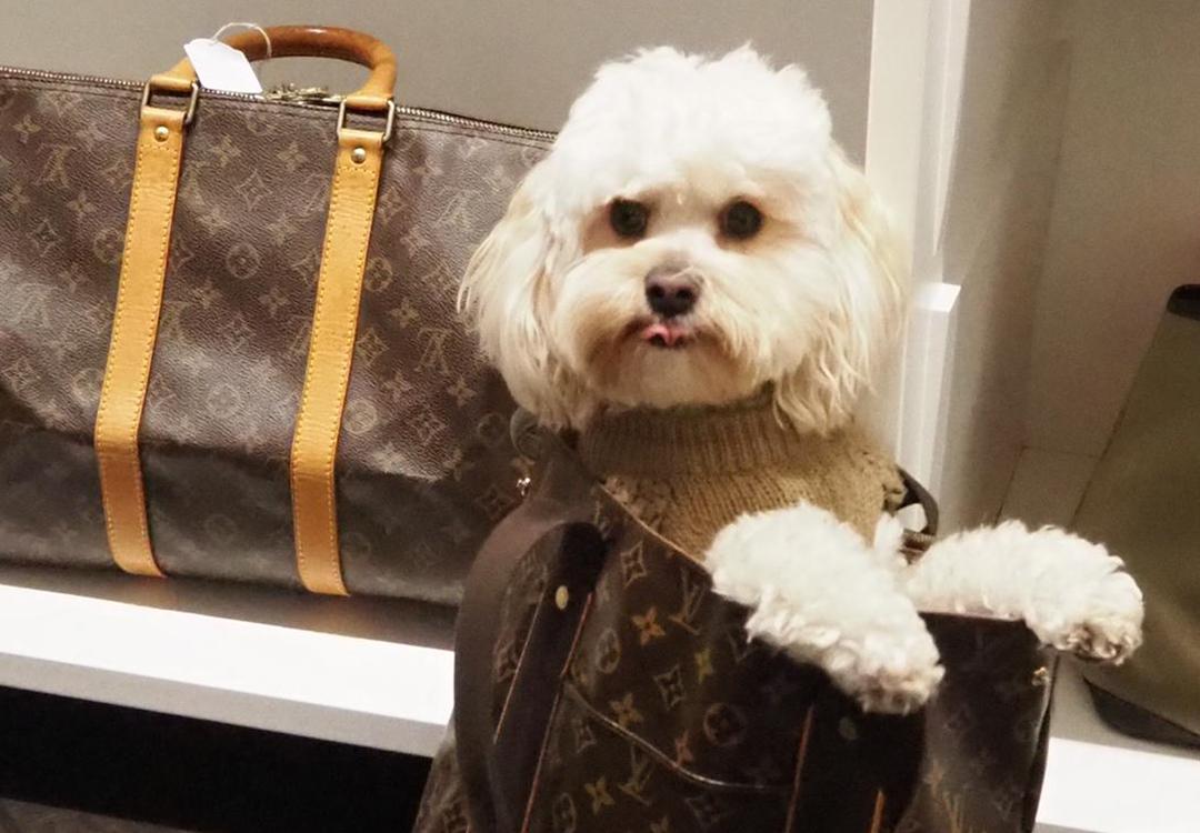 Louis Vuitton Doggy Bag